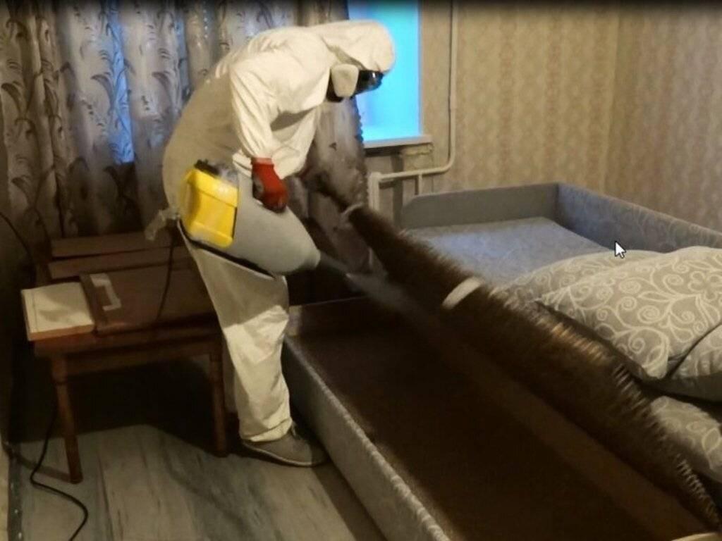 Дезинфекция от блох в квартире: способы, цена, отзывы