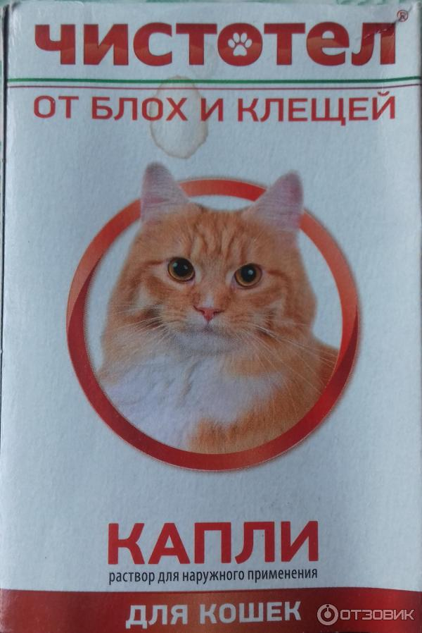 Насколько эффективен и безопасен чистотел капли от блох для кошек?