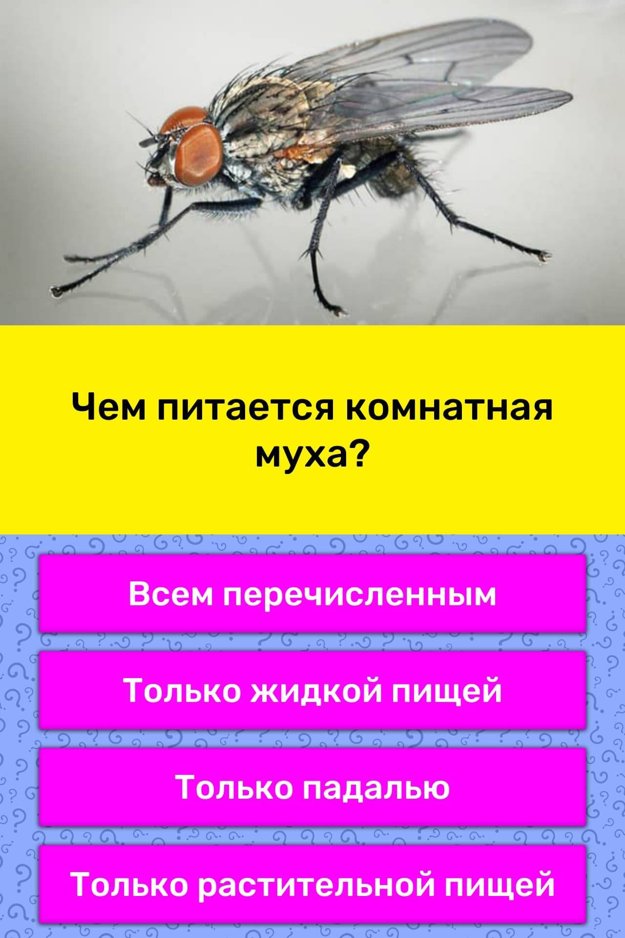 Чем питаются мухи в природе и в домашних условиях?