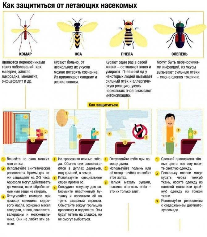 Пчелы и осы – кто умирает после укусов