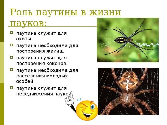 Какие приметы о пауках существуют