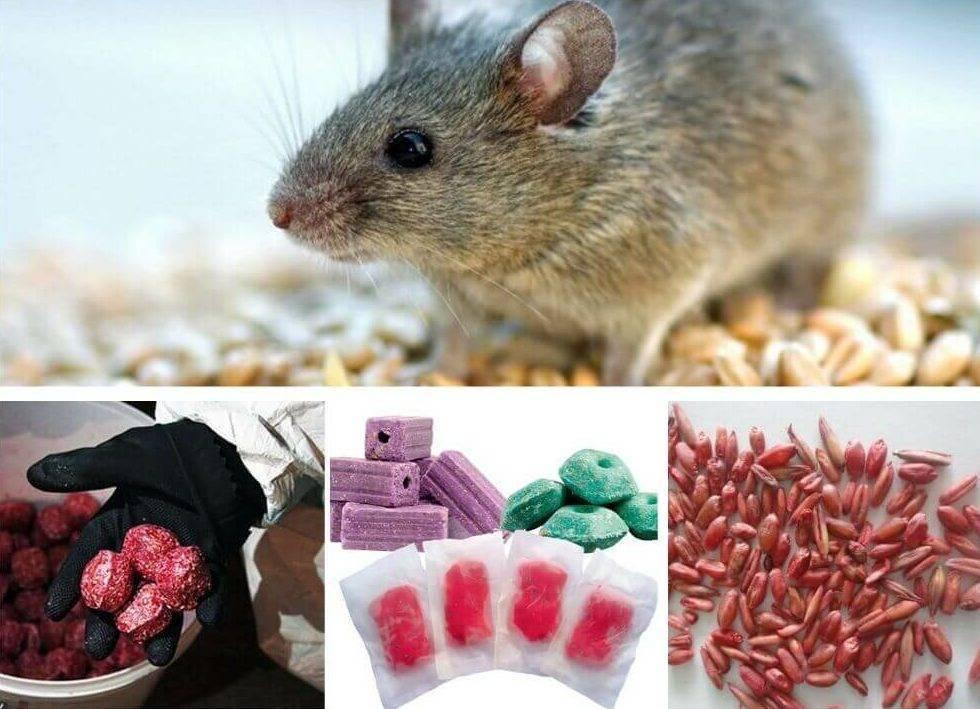 Отравление крысиным ядом у собак: симптомы, лечение отравление.ру отравление крысиным ядом у собак: симптомы, лечение
