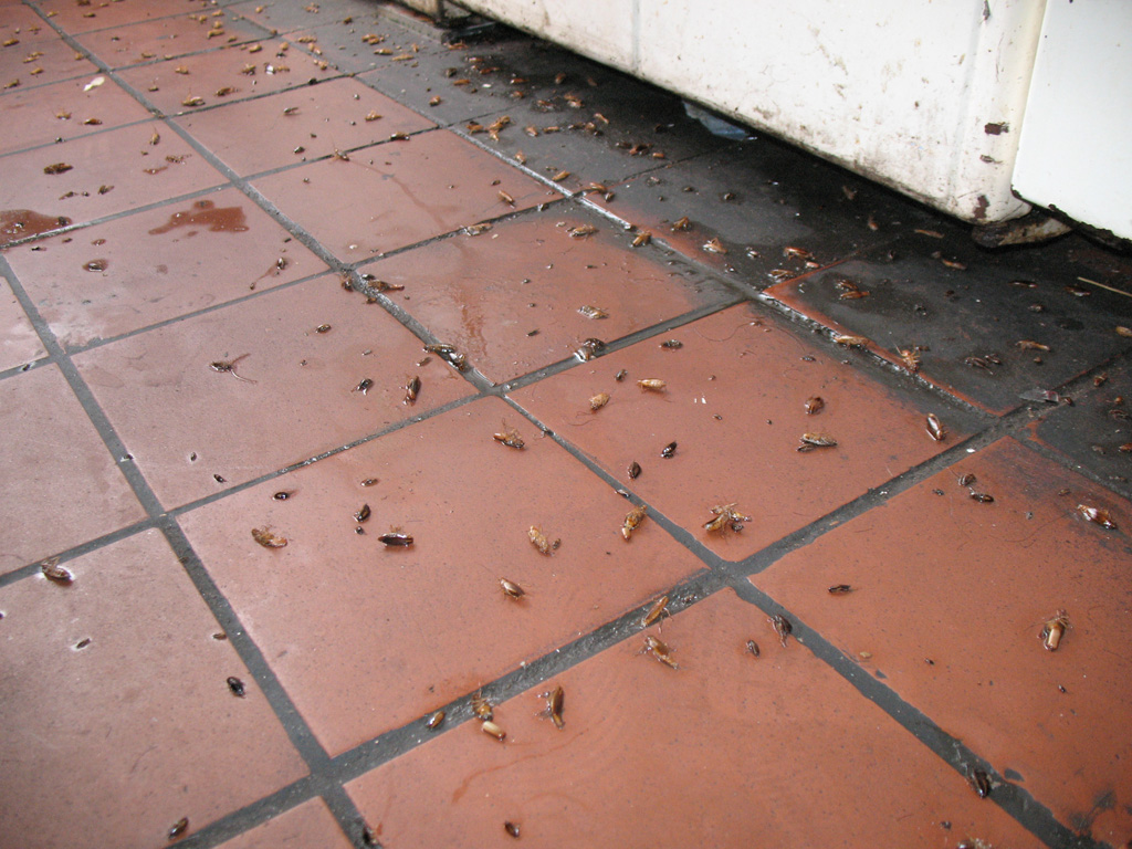 Как можно избавиться от тараканов в общежитии