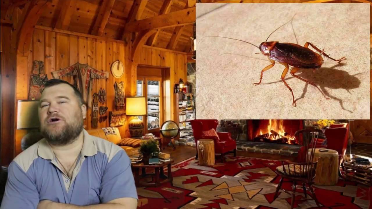 Почему исчезли или куда ушли тараканы? / как избавится от насекомых в квартире