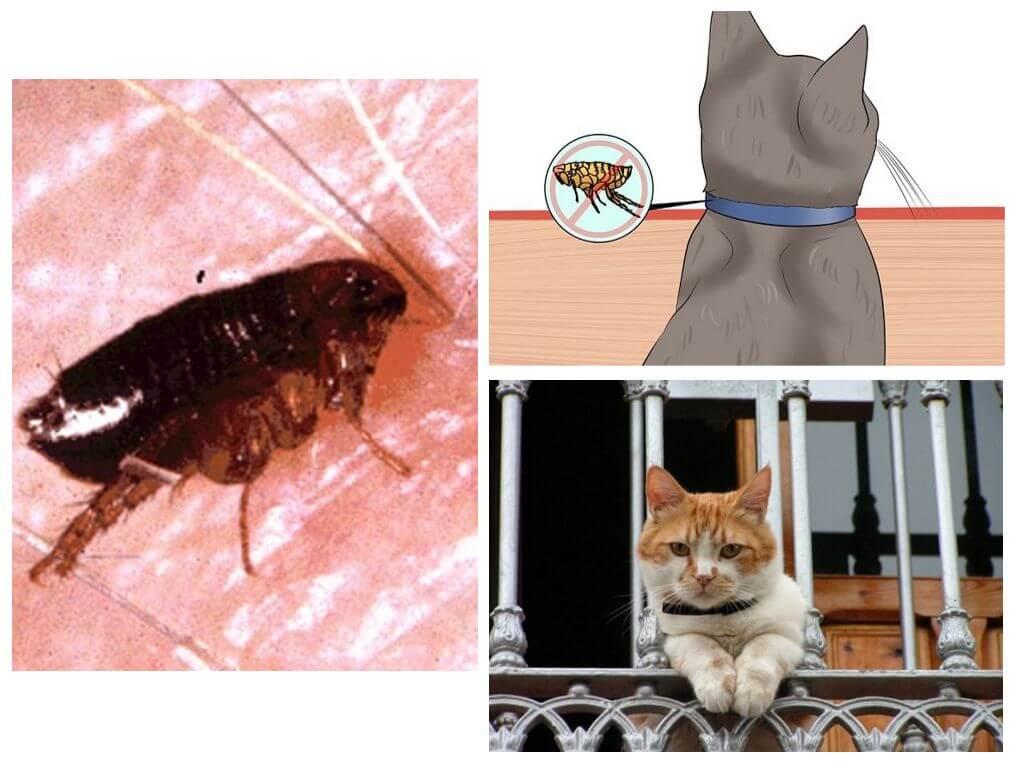 Как вывести блох у кошки: об этом должен знать каждый владелец