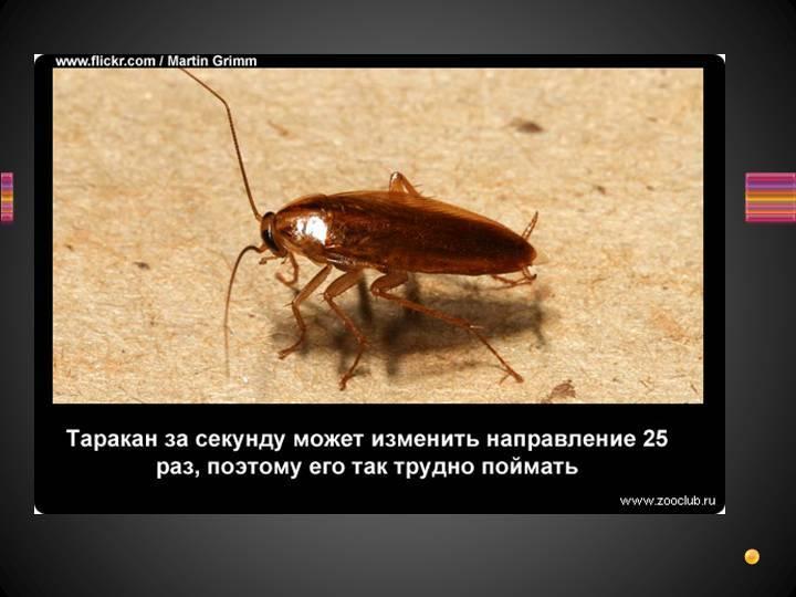Интересные факты о тараканах: в каких странах их разводят для приготовления еды и лекарств
