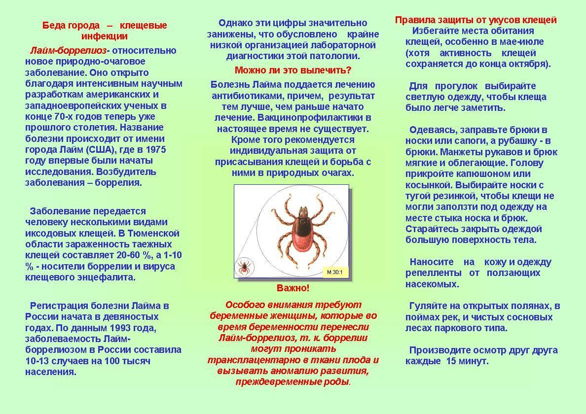 Осторожно, клещи: опасность для человека и животных!