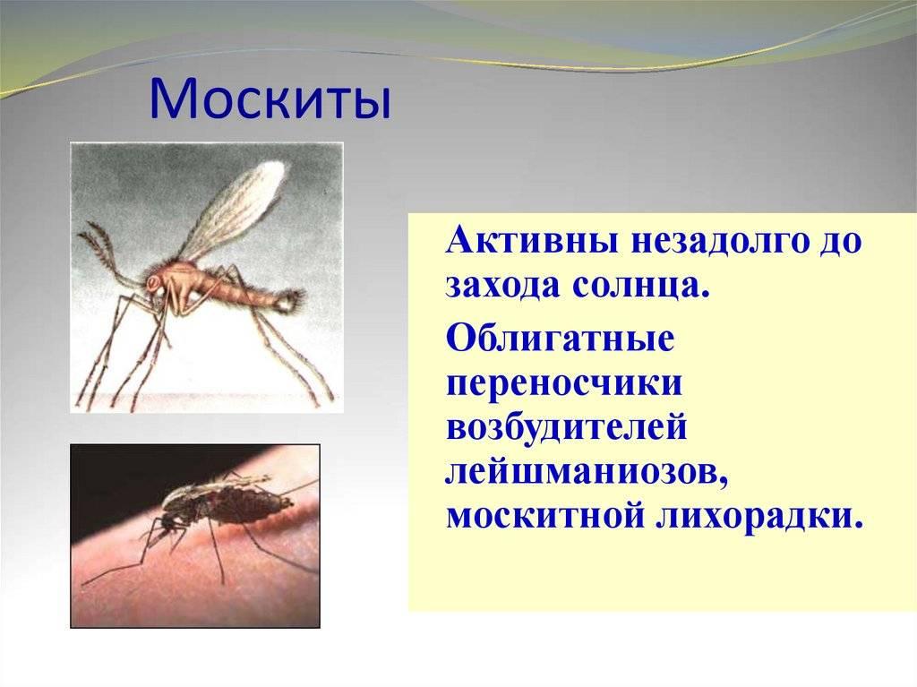 Описание и фото москитов
