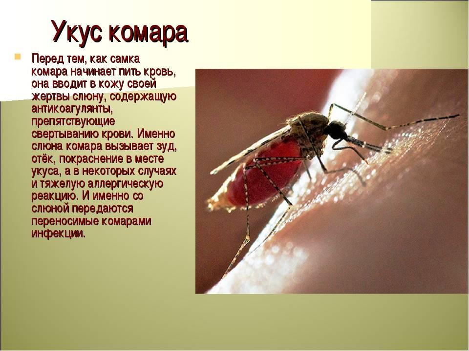 Каких людей охотнее всего кусают комары
