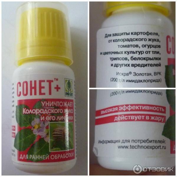 Избавление от колорадского жука эффективными препаратами русский фермер