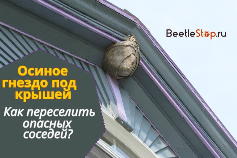 Чего боятся осы: все способы отпугнуть опасных насекомых