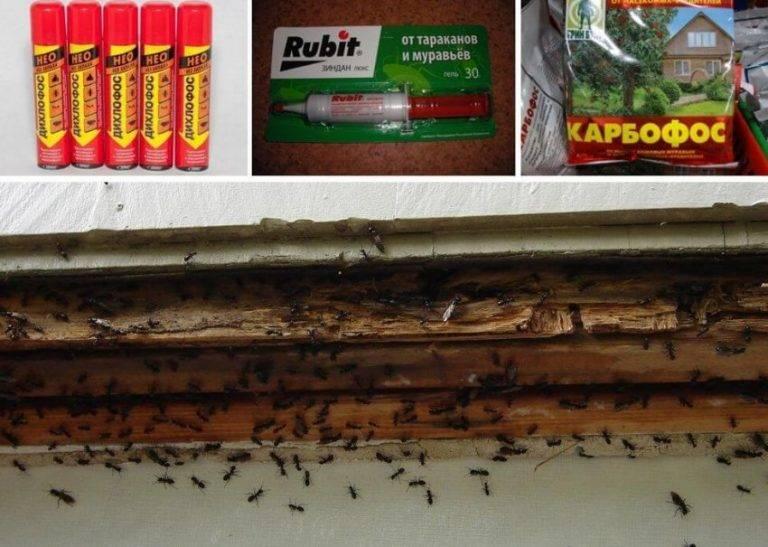Средство от муравьев в квартире: отпугиватель, аэрозоль, порошок, гель и приманка русский фермер