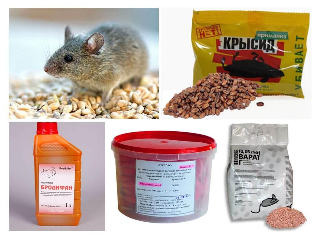 Избавляемся от крыс и мышей с помощью ядов: топ-8 лучших отрав