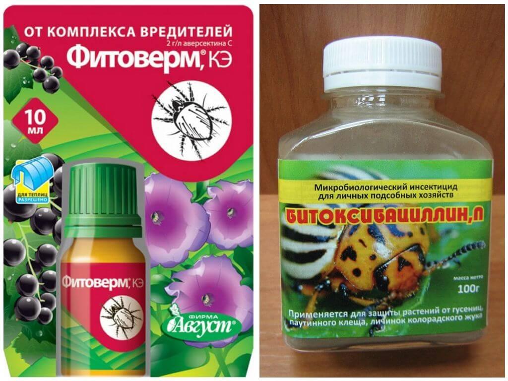 Препараты против колорадского жука — обзор популярных средств