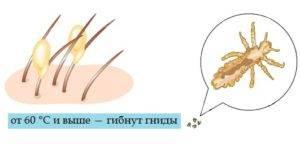 Оптимальная температура для гибели блох
