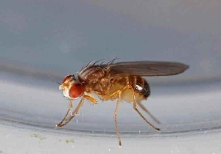 Откуда берутся мухи в закрытом помещении, как избавиться