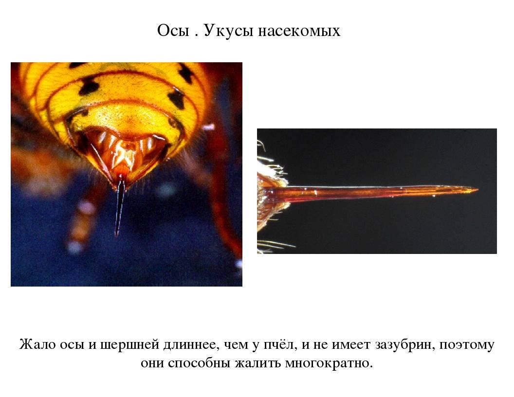 Жало осы: специфика использования