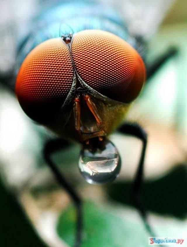 Сколько кадров в секунду видит муха и сколько у неё глаз. у мухи уникальный мозг