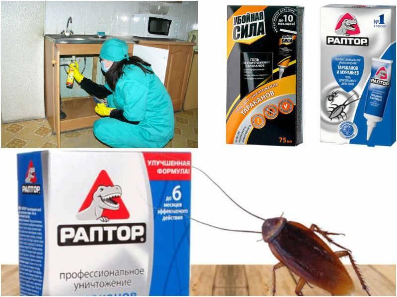 Как вывести тараканов из общежития?