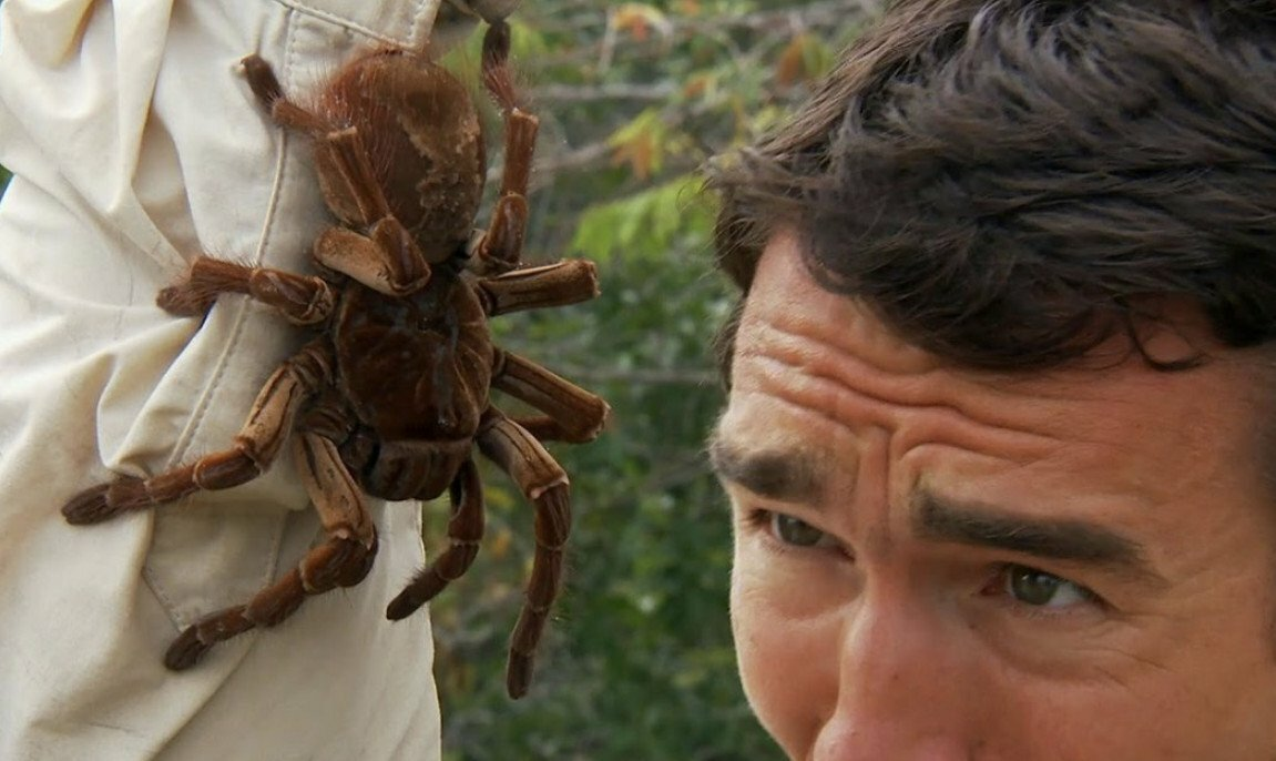 Боязнь насекомых или инсектофобия: причины страха и методы его лечения