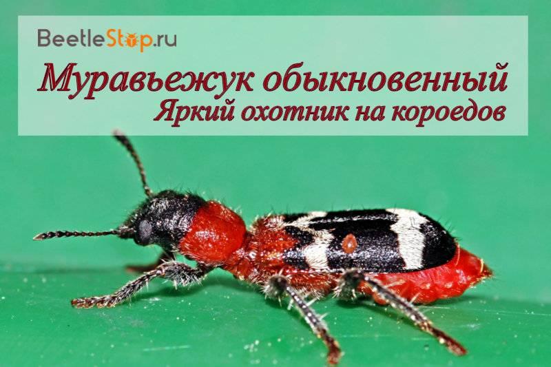 Как зимуют муравьи в муравейнике