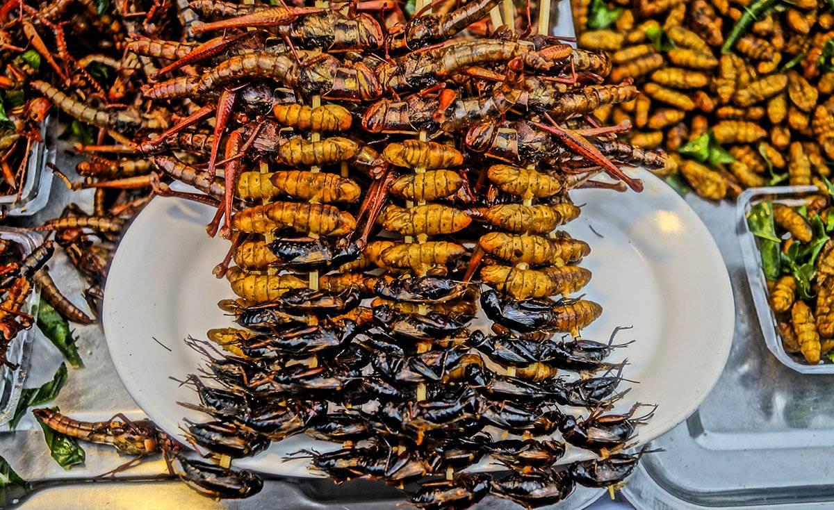 Самые опасные насекомые на даче – список, названия, где водятся, фото и видео