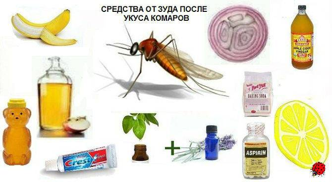 Как правильно снимать зуд, отёчность и восполнение от укусов комаров с помощью народной медицины