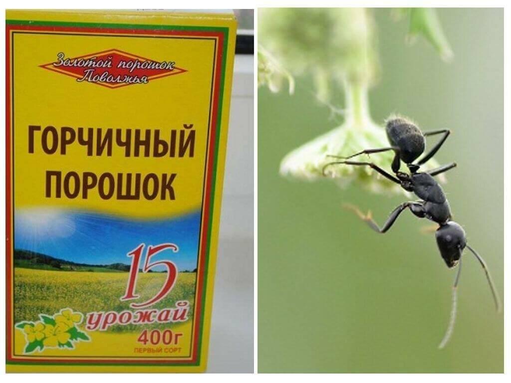 Как избавиться от муравьев на дачном участке раз и навсегда народные средства видео
