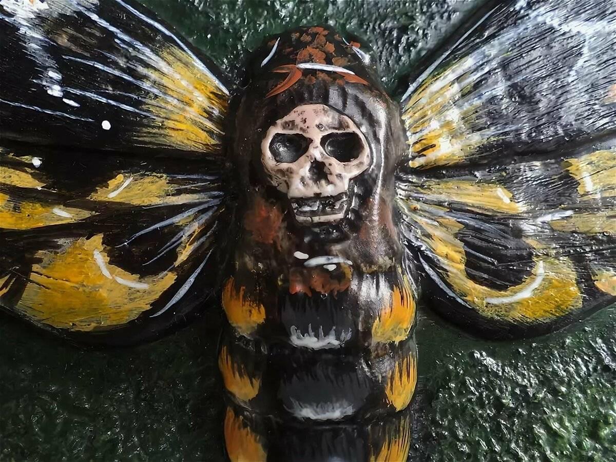 Мёртвая голова (бабочка) — википедия. что такое мёртвая голова (бабочка)