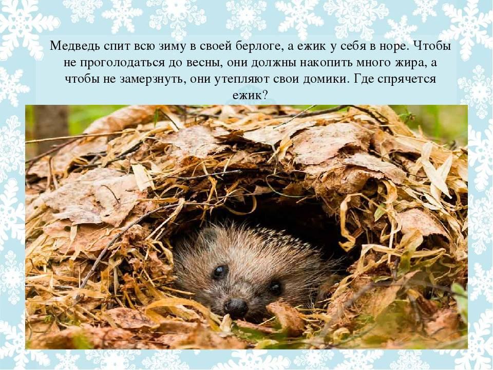 Зимняя спячка - удивительный мир животных