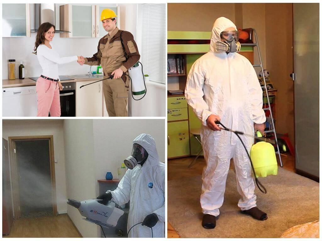 Уничтожение клопов и обработка квартиры: дезинфекция и дезинсекция