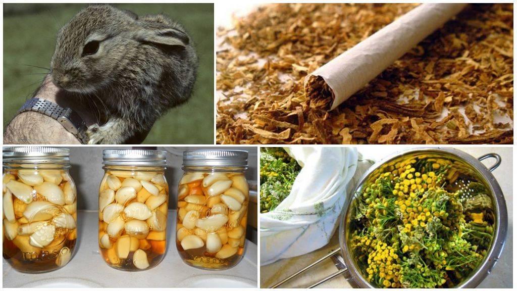 Защита кроликов от комаров: советы и видео обзор защита кроликов от комаров: советы и видео обзор