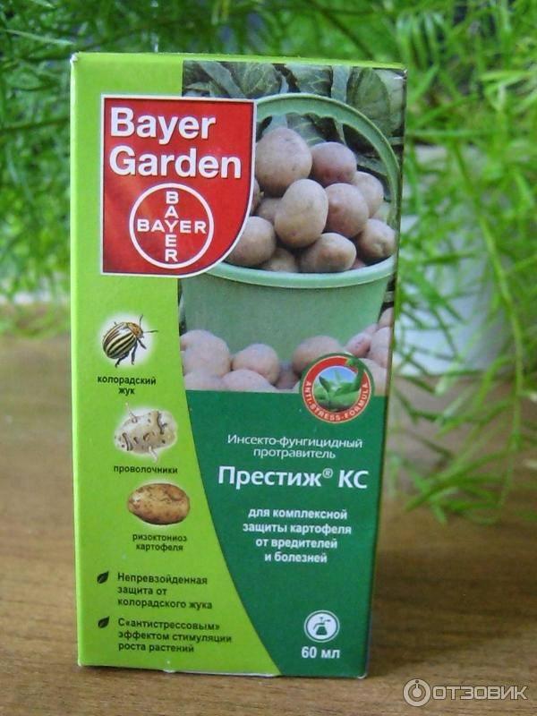 Как избавиться от колорадского жука на картошке: лучшие препараты и самые эффективные средства