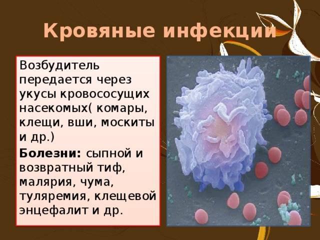 Можно ли заразиться гепатитом от комара