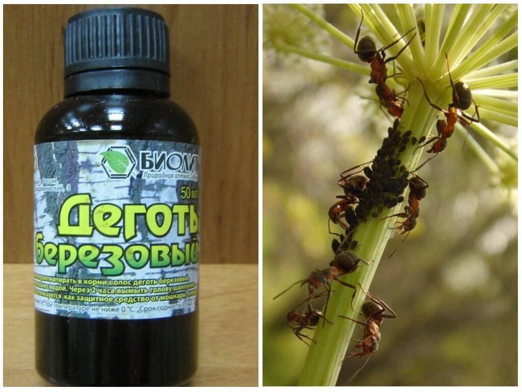 Дегтярное мыло против тли и муравьев