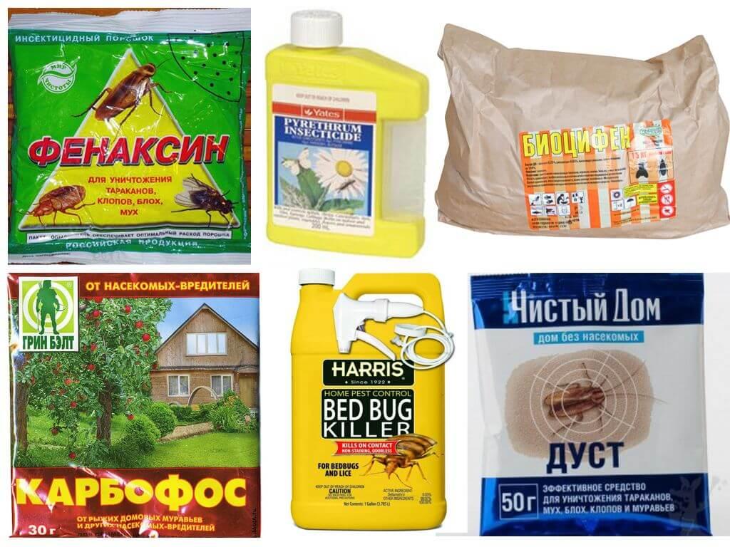 Безвредный инсектицид: пиретрум от клопов