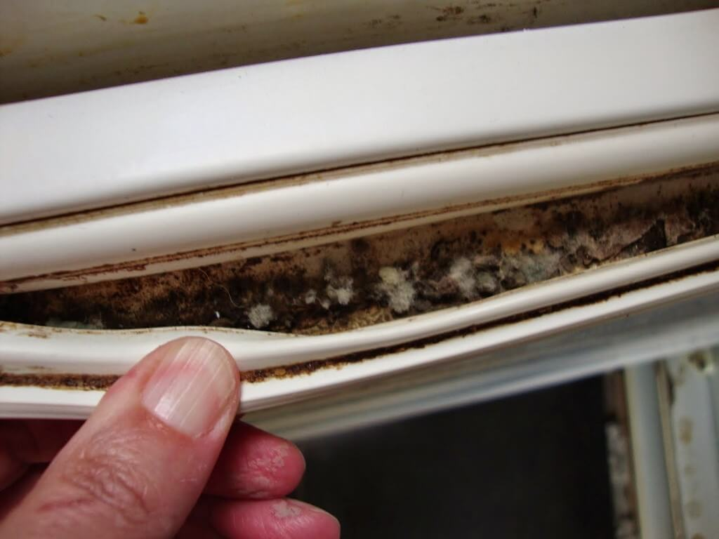 Тараканы в холодильнике: как спасти бытовой прибор и продукты