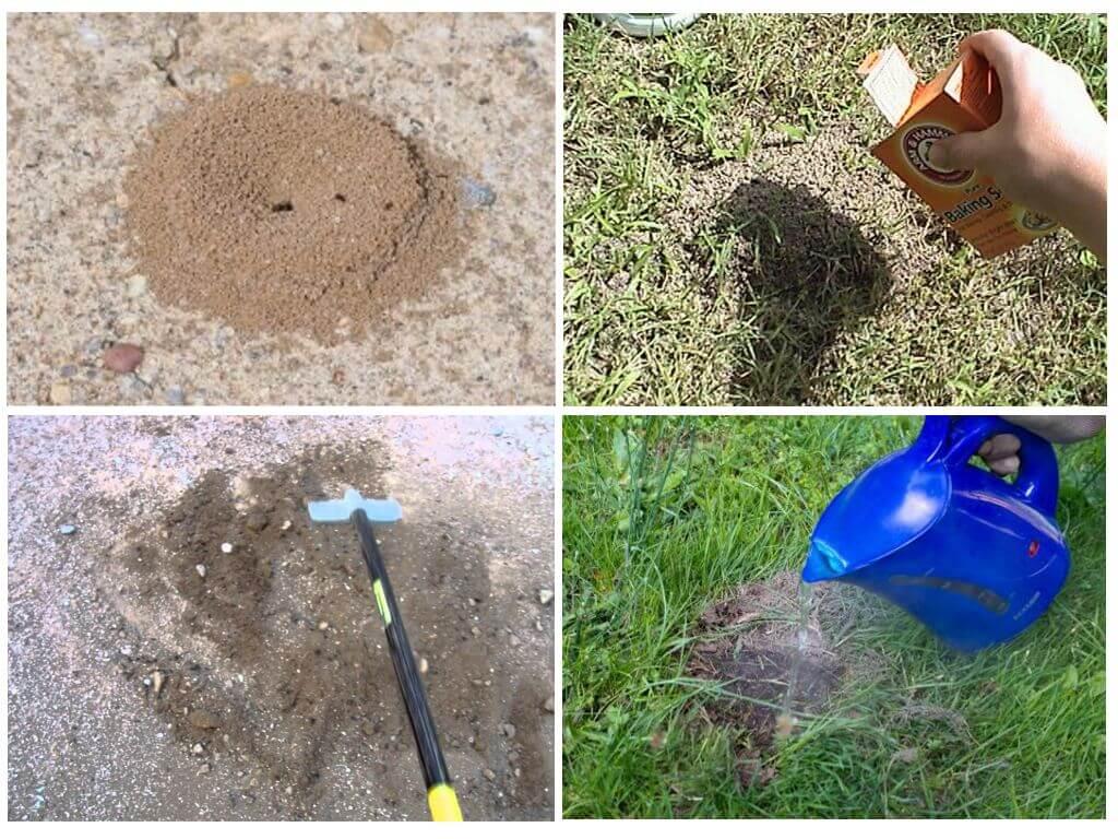 Способы борьбы с муравьями в теплице