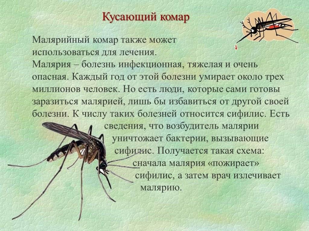 Самые опасные насекомые – список, чем опасны, названия, где водятся, фото и видео