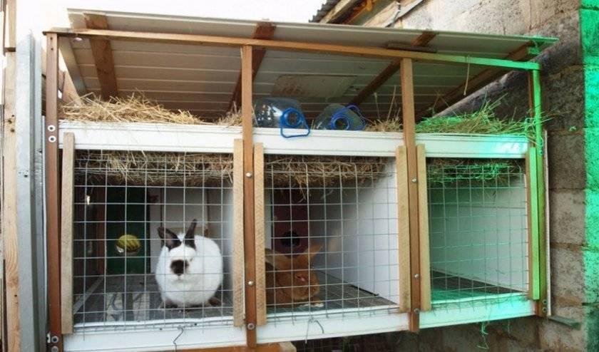 Как спасти кроликов от комаров на улице и в крольчатнике - сорнякам нет