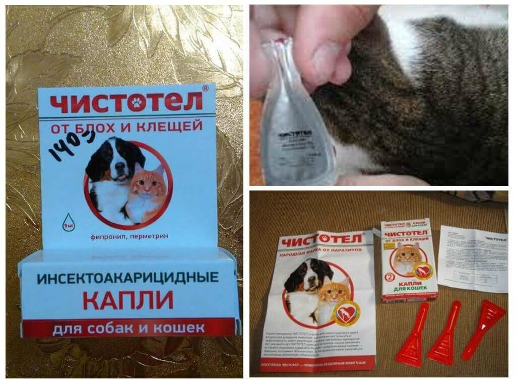 """""""чистотел"""" от блох и клещей для собак и кошек: описание, инструкция по применению, аналоги и отзывы"""