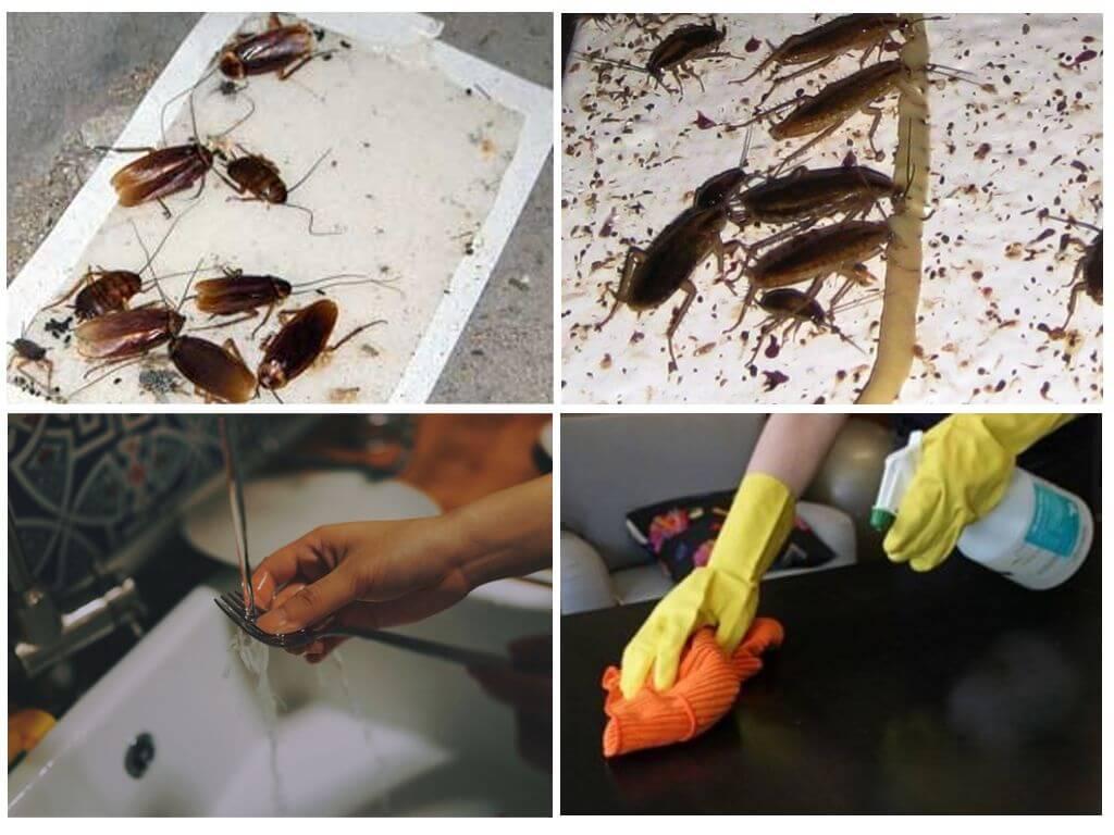 Чего боятся тараканы и какой запах они не любят в квартире?