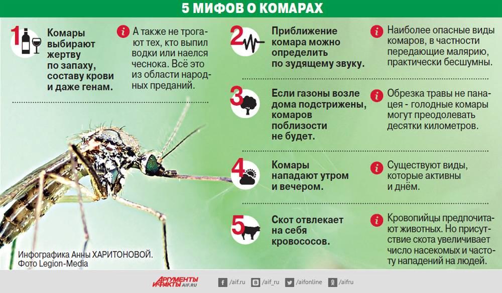 Нашествие комаров: крылатые кровопийцы терроризируют всю россию