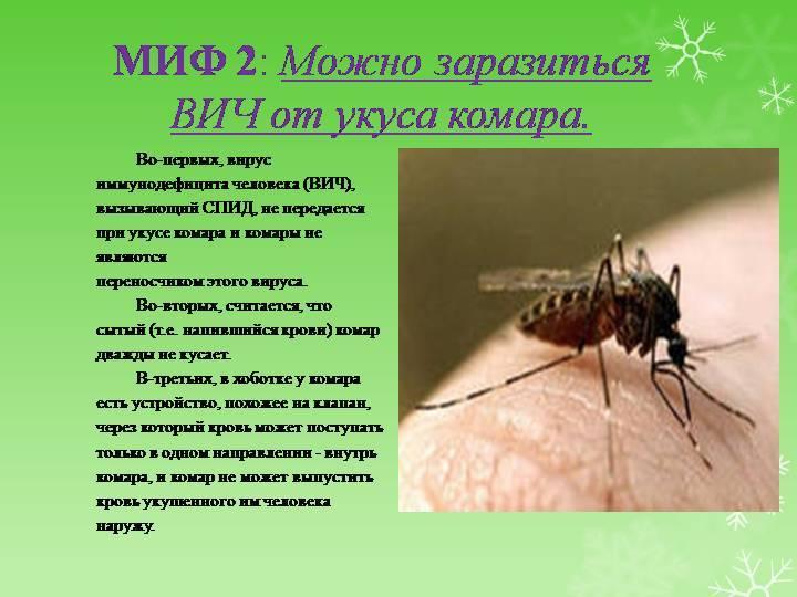 Может ли комар заразить гепатитом с – всё о болезнях печени