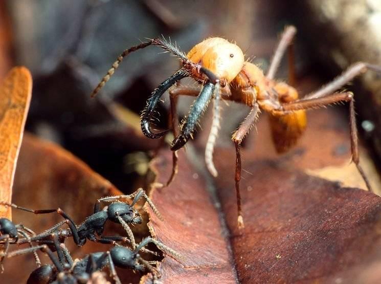 Самые невероятные виды муравьев в россии и в мире.