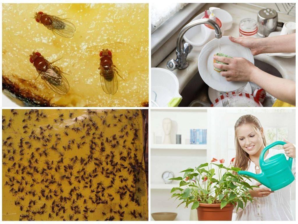 Как избавиться от мошек на кухне