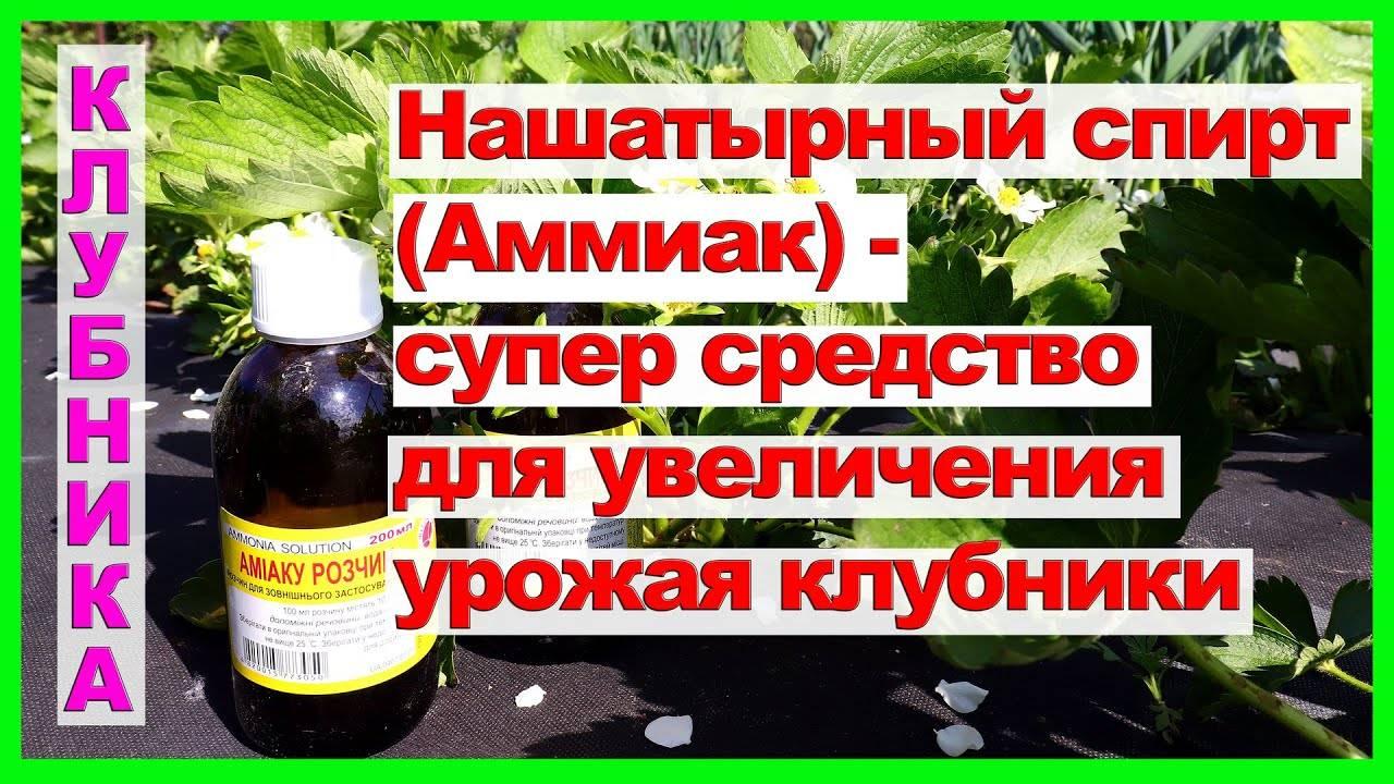 «скорая помощь» и профилактика для клубники: как получить здоровую ягоду