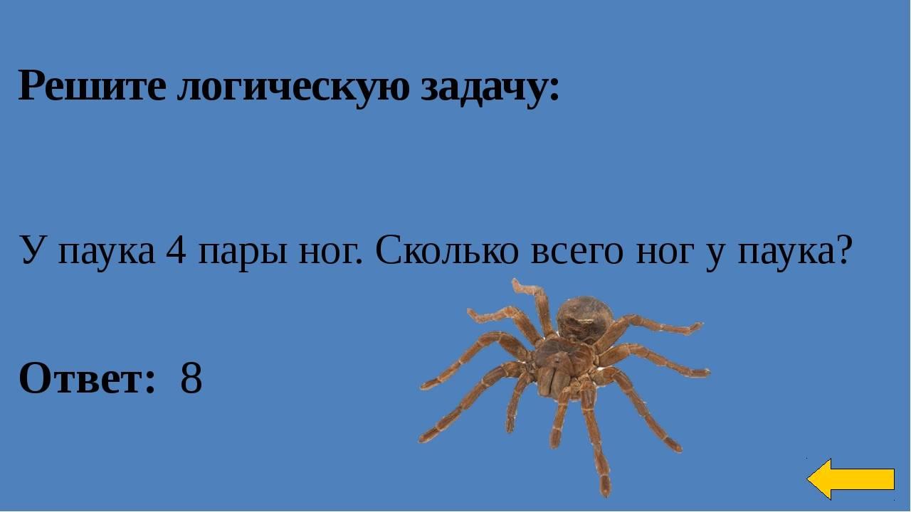 Сколько ног у паука и почему всё не так однозначно: освещаем подробно