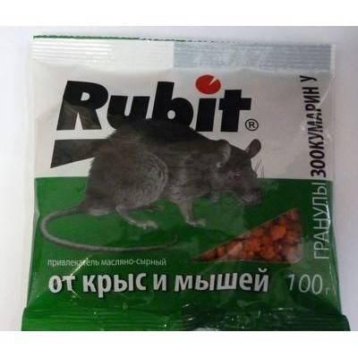 Могут ли крысы жить в стенах дома || живут ли крысы с мышами