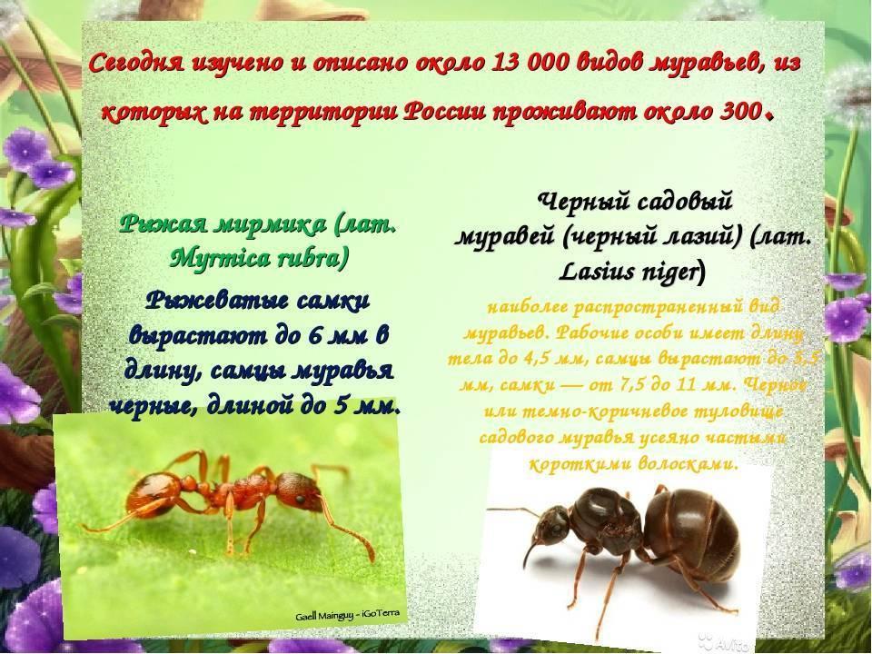 Виды муравьев – фото, названия и описания всех видов